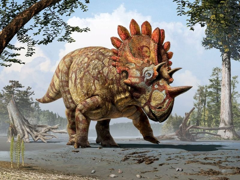 meet-hellboy-the-dinosaur-with-exotic-horns-and-frill